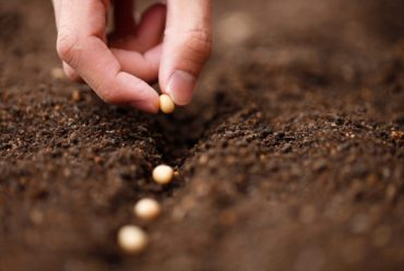Startup Success in Every Stage of Growth – Seed Stage